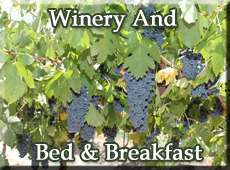 Winery B&B